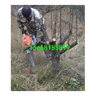 大型瓣式挖树机定做
