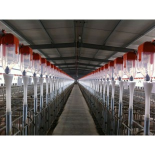 东北养猪自动料线现货供货/开元畜牧质量保障质优价廉