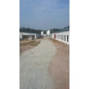 桂林养猪自动料线订做/开元畜牧质量保障量大从优