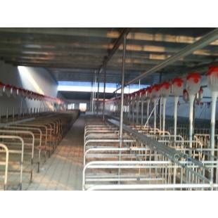 浙江猪自动化喂料线生产订制/开元品质保障值得信赖